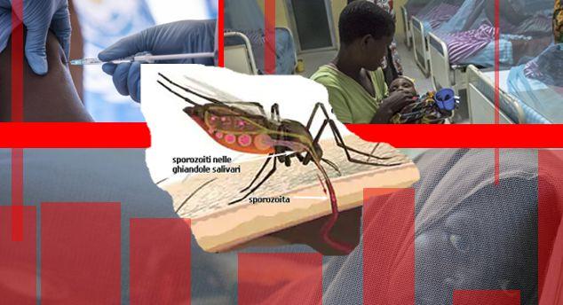 Cinquecento milioni di persone  ammalate di malaria